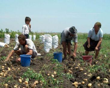 fermieri-camp-agricultura-romania