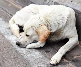 Problema cainilor maidanezi si etica consumului de carne
