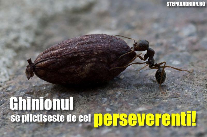 ghinion perseverenta lupta