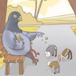 porumbelul hrănește oameni