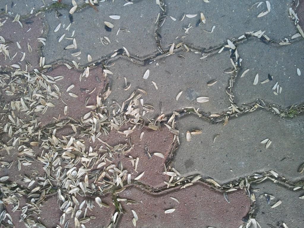 semințe în parc lipova